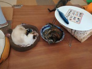 猫まるカフェ上野店口コミ